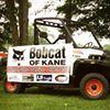 Bobcat of Kane