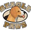 Beagle Paws
