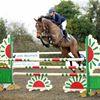 Egerton Sport Horses