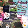 Furry Friends- Dog Daycare,Horse Care, Dog Walking, Pet Sitting &Transport