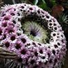 Ellas Minde Eventyrlig Blomsterkunst