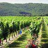 La Vinothèque, maison des vignerons du Lot