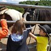 Kentucky Action Park and Jesse James Riding Stables