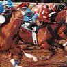 Arizona Quarter Racing Association