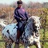 Braeside  Equestrian  Centre