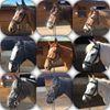 Seechem Equestrian Centre