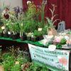 Potwell Nurseries - Broadwindsor