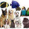 MCG Pet Supplies