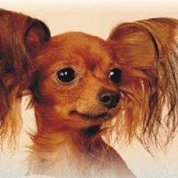 Studio pielęgnacji psów Rino
