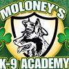 Moloney's K-9 Academy