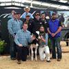 Rockstarcows & Galba Holsteins