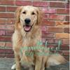 Pawlished Dog Training LLC