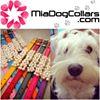 Mia Dog Collars