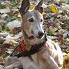 Team Greyhound Adoption of Ohio