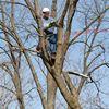 Perfection Landscape & Tree, LLC