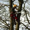 Stan Timmins and Sons Ltd - The Tree Surgeons