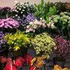 Floral Pride