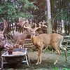 Lowlands Whitetails Deer Hunting Ranch