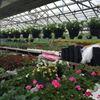 Garden Central Nursery at Whickham Highway