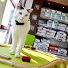 Clinique Vétérinaire Vierzon : Les Aubépines