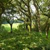 Broomhill Farm Holiday Cottage Bude