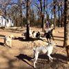 Romp N' Run Ranch