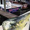 Wet-n-Wild Sportfishing