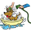 All Paws Pet Wash