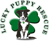 The Lucky Puppy Rescue