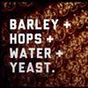 Bovine & Barley