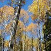 UPM Blandin Forestry