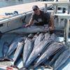 GT Lures N Sportfishing