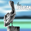 Bay High School Yearbook: The Pelican