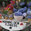 Morning Dew Flowers