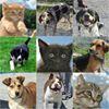 Harlan County Animal Shelter