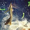 Off The Chain Fishing Charters, Fishing Charters in Stuart Fl