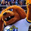 T-Bone, Official Mascot of Pace University Athletics