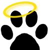 Positive Approach Dog Training & Daycare