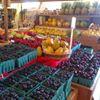 Milillo Farms