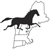 New England Equine Medical and Surgical Center