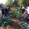 Farm to School Hub - Alachua County Public Schools