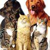 Rensselaer County Humane Society
