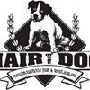 Hair of the Dog Pub Toronto