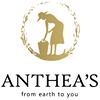 Anthea's