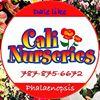 Cali Nurseries