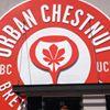 Urban Chestnut - the Grove