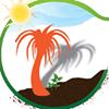 L'ombre du palmier