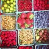 Monadnock Berries