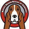 Basset Hound Rescue of Alabama - BHRA