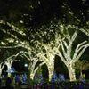 ChristmasTown-Busch Gardens Tampa